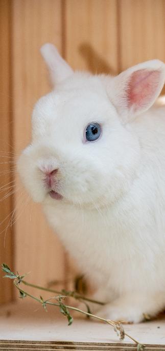 סטיץ,ננסי הולנדי, צבע bew, נולד  10.3.19