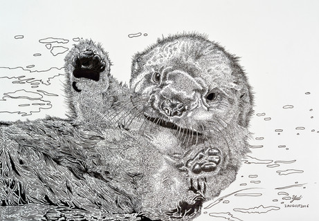 Floating: A baby otter
