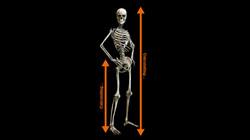 Anthropometric Analysis