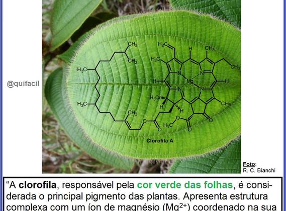 Clorofila.jpg