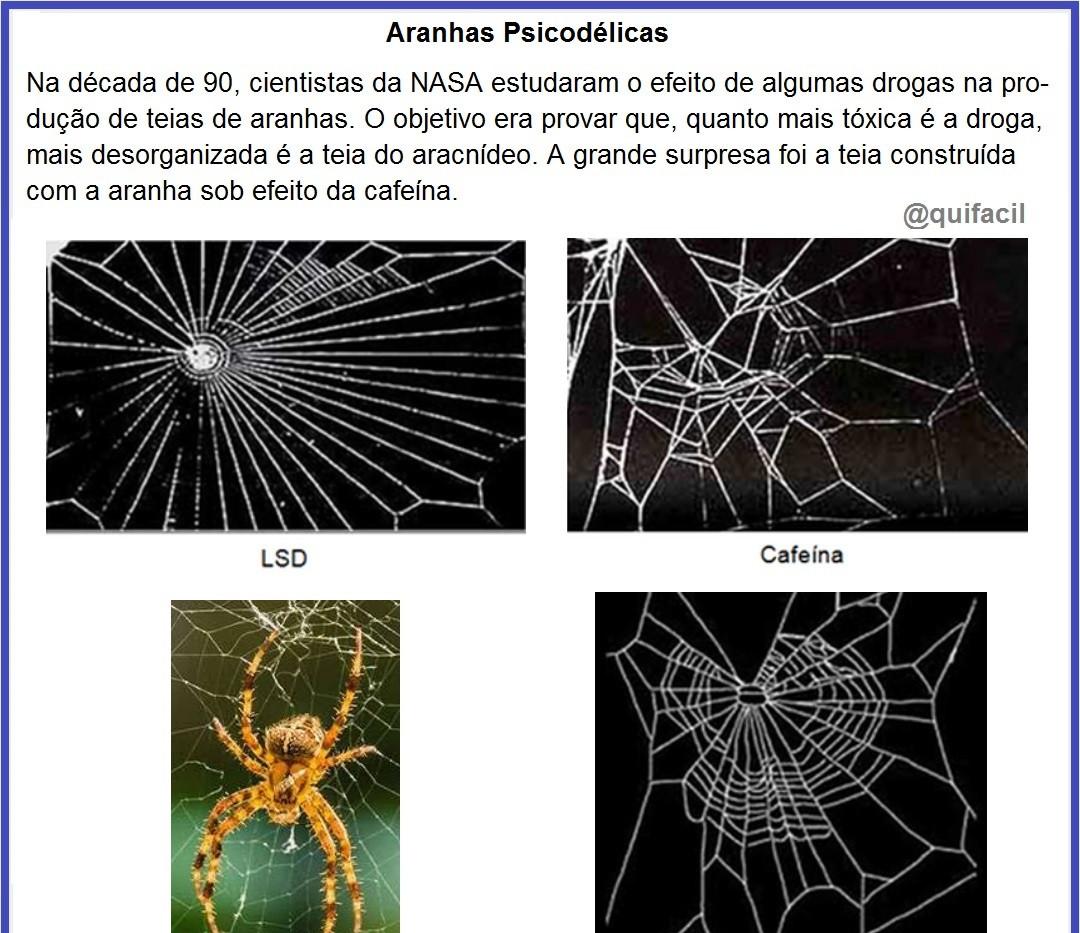 Aranhas_Psicodélicas.jpg