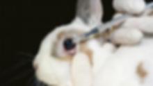 O uso de animais no desenvolvimento de cosméticos e as alternativas
