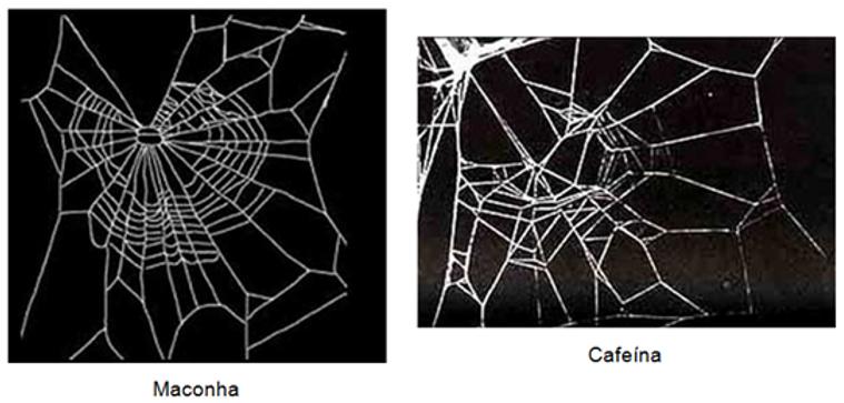 Aranhas sob efeito de drogas