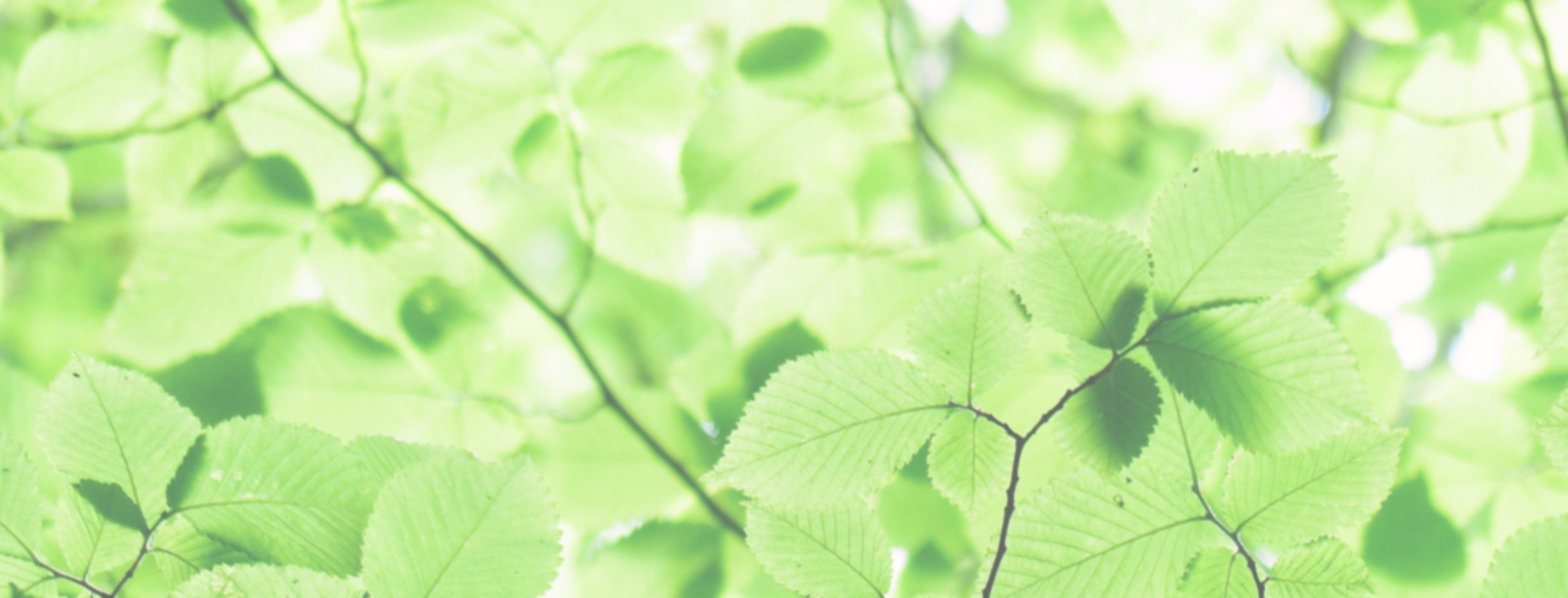 Canva - Close Up Photo of Green Leaves_e