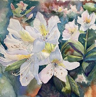Kathryn Collins . white rhodedendrons 2021.jpg