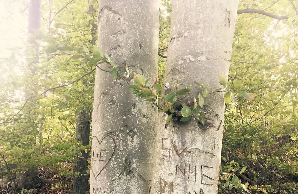 inristning, träd, natur
