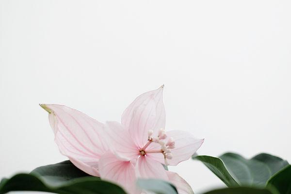 pink-petaled-flower-1859585.jpg
