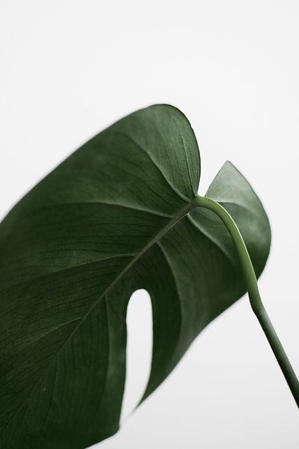 green-leaf-1524235.jpg