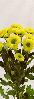 Santini jaune