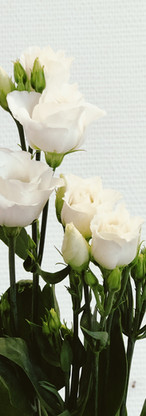 Lisanthus blanche