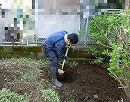 東京都中野区銀木犀植栽(新しく木を植える))