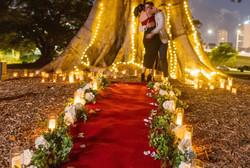 Fairy Light Proposal