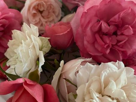 VDOT Trash Picker Upper, Roses for Potpourri, and Seek Lavender Strawberry Pie!