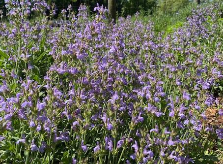 Seek Lavender Spring - Part Five
