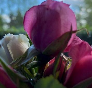 Seek Lavender Spring - Part Six