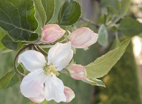 Seek Lavender Spring - Part Four