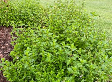 Introducing Seek Lavender Herbs de Provence!
