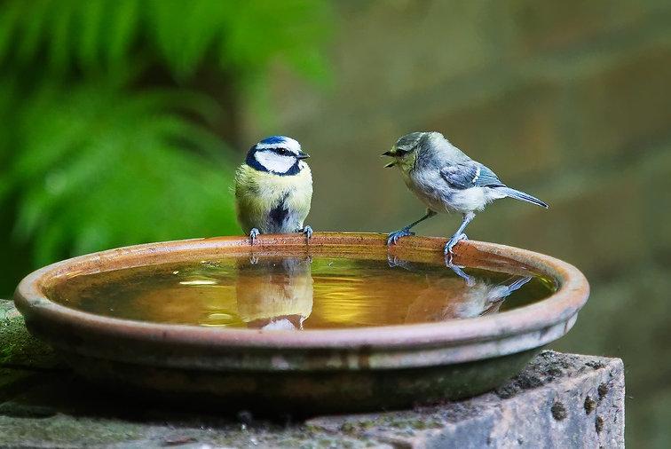 Fugler-som-konverserer.jpg