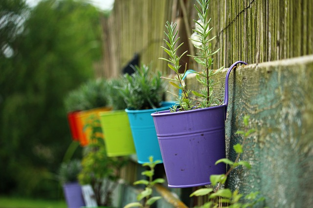 Bug Repelling Plants In Planters