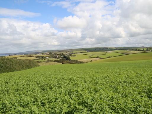 UK: A Cornish Yoga Retreat