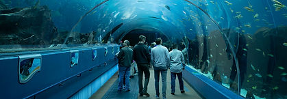 Georgia Aquarium Tunnel.jpg