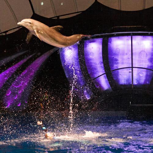Georgia Aquarium Dolphin Show