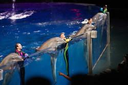 Georgia Aquarium Dolphin Presentation