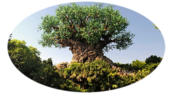 Animal Kingdom Photo.png