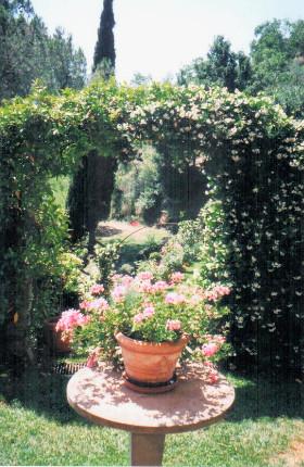 Bramasole garden. Photo by Diana Dinverno