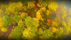 Fall Ohio