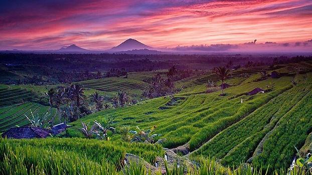 rice-fields-bali_jatiluwih-rice-field-su