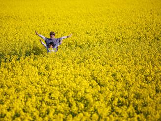 Yellow wonderland, rapeseed flower in Hokkaido