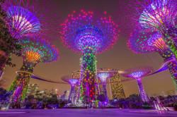 Supertrees lightshow