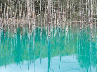An enchanted pond, Blue Pond in Hokkaido (青い池)