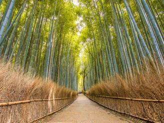 Absolute serene, Arashiyama