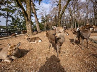A day @ Nara (奈良)