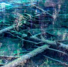 lac vert carrés-7.jpg