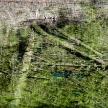 lac vert carrés-9.jpg