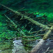lac vert carrés-2.jpg