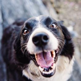 animal-blur-canine-close-up-551628 (1).j