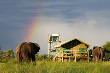 ELEPHANTS AFRICA