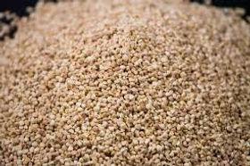 granulado de flocos de milho para roedores