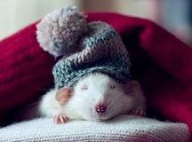 rato-bem-estar