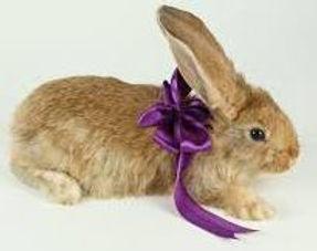 enxoval-coelho