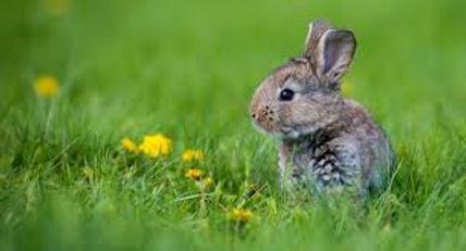 coelho no quintal.jpg