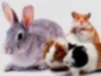 Tudo sobre roedores e coelhos