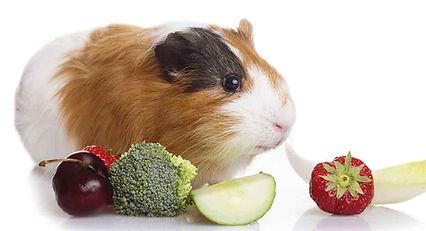 alimentação-porquinho-da-india.jpg