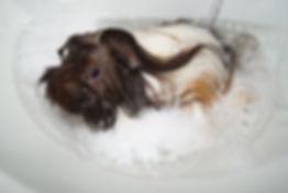 banho relaxante.JPG