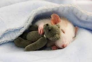 rato-alojamento