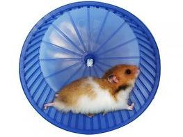 hamster-na-roda-300x225.jpg